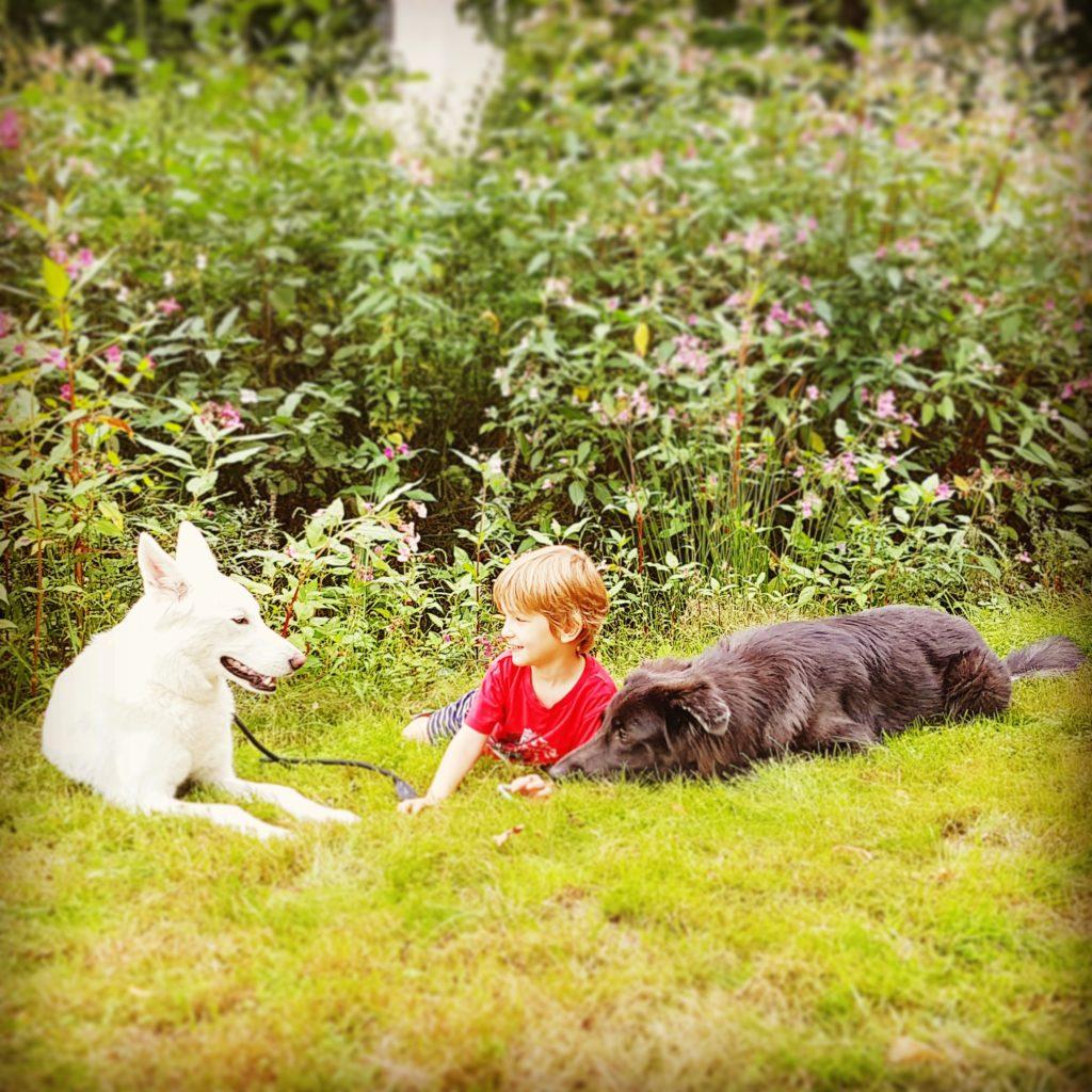 Kleinkind mit Wolfhunde Sylvan Companion Dogs