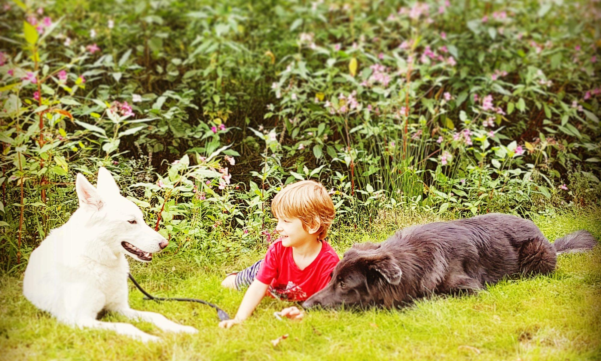 Unser kleiner Hundetrainer Sylvan Spirit