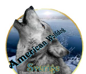 American Wolfdog Europe